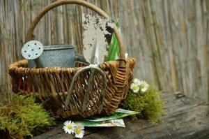 garden-1290908_1280