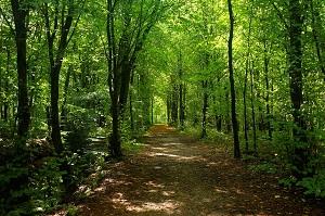 Die 7 besten Tipps zur Entspannungwald